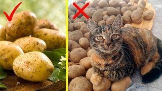 Так ВОТ Почему МОЛОДАЯ Картошка ПОЛЕЗНЕЕ Старой !!! ПОЧЕМУ Я Не Знала ЭТОГО Раньше...