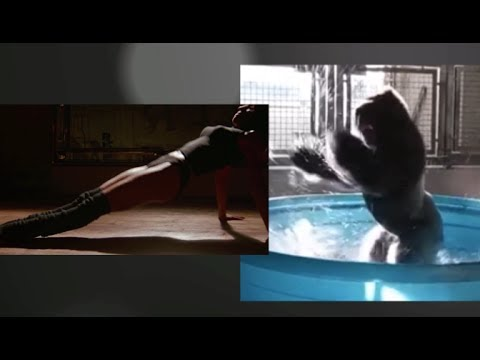 GORILLA ZOLA dancing in a Pool to the Flashdance Maniac song