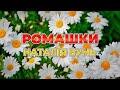 Ромашки - Наталія Бунь (Українські пісні,  Ліричні пісні)