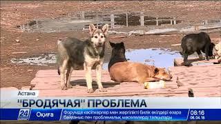 Чипировать домашних животных начали в Астане