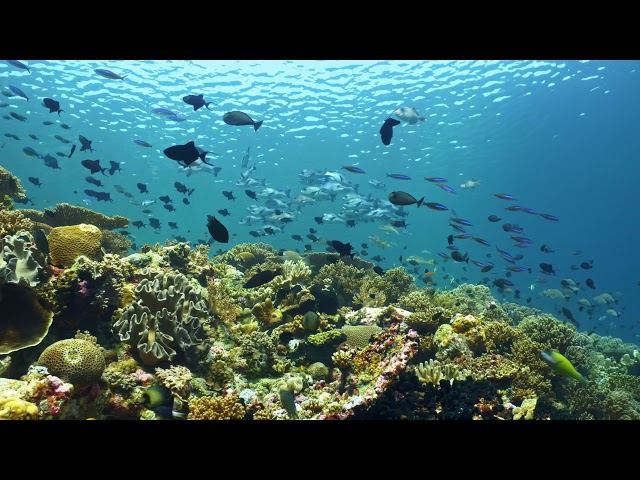Take a Minute XI: The reefs of Wakatobi