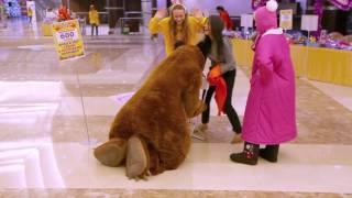 маша и медведь крокус