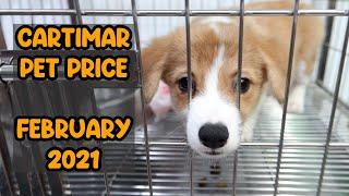 CARTIMAR PET PRICE FEB 2021 UPDATE (Corgi, Jack Russell Terrier, French Bulldog, Persian and more)