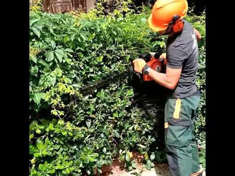 Michele Sala - Operatore Agricolo Manutenzione Verde  Taglio siepe Pitosforo