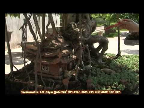 Vietbonsai.vn: Tạo hình nghệ thuật cho cây cảnh - P1