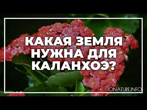 Какая земля нужна для каланхоэ? | toNature.Info