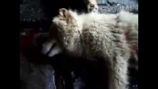✦INSIDE THE BARBARIC DOG MEAT MARKET IN CHINA(Part.3)✦