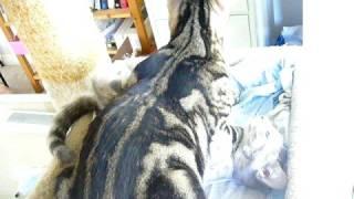 Cat porn II