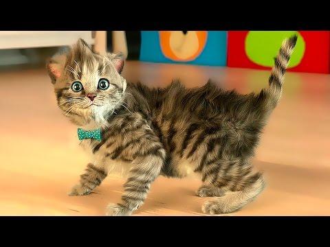 Мультик про котят Маленький МИЛЫЙ КОТЕНОК Мой любимый кот Видео Игра как мульт для детей #МАЛЫШЕРИН