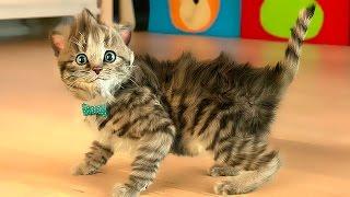 Маленький котенок #1 | Играем и кормим пушистого котенка в детской игре