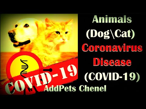 Animals (Dogs/Cats) And Coronavirus Disease (COVID-19). Possible Treatments