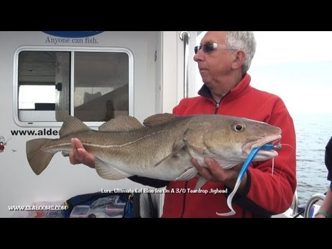 Bass, Cod, Pollock and Conger Wreck Fishing Weymouth on Tiger Lily