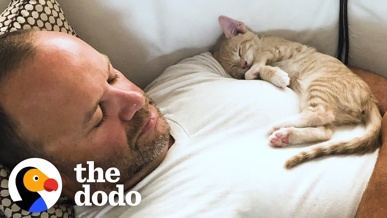 Kitten Becomes Completely Obsessed with His Dad | The Dodo Cat Crazy