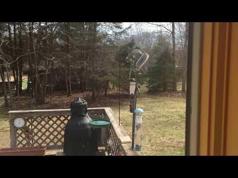Squirrel Wars Electric Fence Bird Feeder Doovi