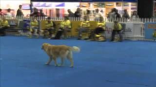 Canine Survivor Episode 1 Task 2: Dogs Fetching A Newspaper, Wodac, Johannesburg, South Africa
