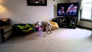 Dalmatian Toy Attack 2
