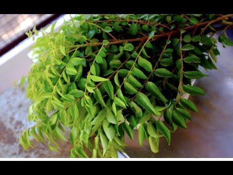 How to Keep Curry leaves  fresh for long /കറി വേപ്പില എങ്ങിനെ കേടുകൂടാതെ കുറെ നാൾ സൂക്ഷിക്കാം ?