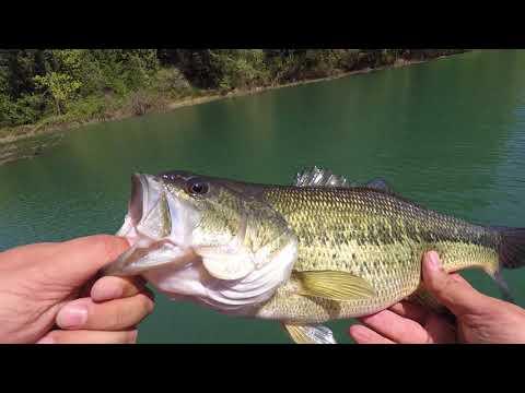 Henry Hagg Lake Bass Fishing
