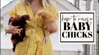 HOW TO RAISE BABY CHICKS + PREDATOR PROOF THE COOP   Backyard Chickens 101   Becca Bristow