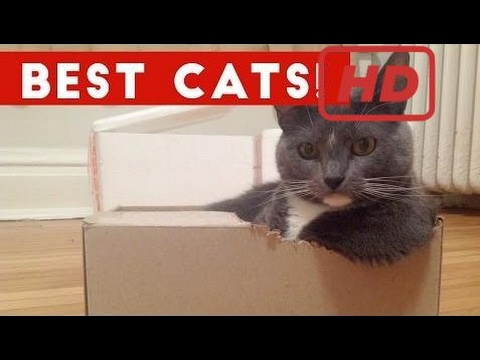 Funny Cat Videos Compilation December 2016 | Funny Pet Videos