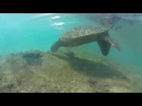 Maui 360 Vacation Video - Samsung Gear 360 2017