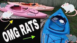 OMG THERES RATS IN THE KAYAKS