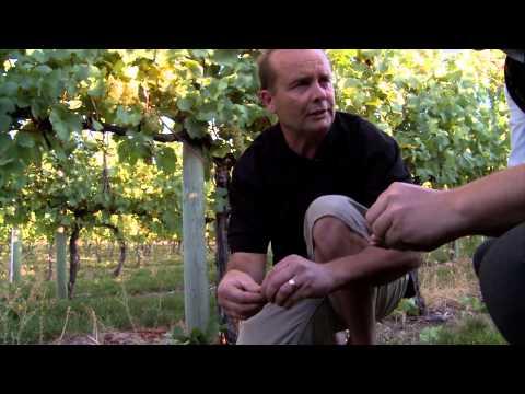 Wine Sense Season 1 Episode 107 (Sauvignon Blanc, Gewurtztraminer, Chardonnay)