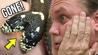 WHEN YOUR TWO HEAD SNAKE ESCAPES!! | BRIAN BARCZYK
