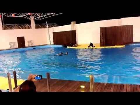 Dolphin Show  in Jeddah, Fakieh Aquarium, Saudi Arabia