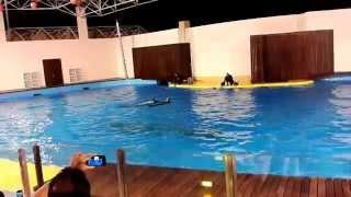 Dolphin Show  in Jeddah 2013