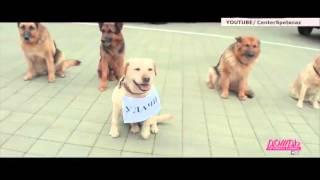 �������� ���� ОМОН и «Офицеры России» записали клип в поддержку Полины Гагариной на Евровидении ������