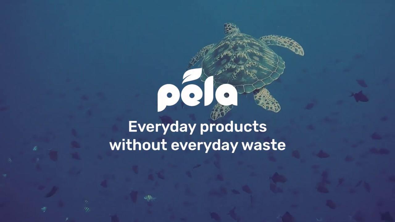 Limited Edition Turtle Cases– Pela Case