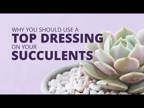 Why You Should Use A Top Dressing On Your Succulents | Succulents In Seconds