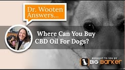Where Can You Buy CBD Oil For Dogs?