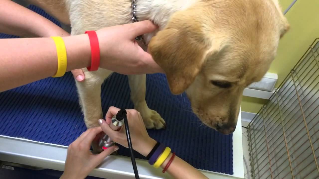Canine physical therapy - Animal Physical Therapy Vet Therapy Wound Healing Therapy
