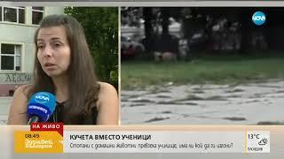 Кучета вместо ученици - Здравей, България (23.05.2018г.)