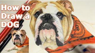 Nasıl Çizilir? | Köpek Nasil Çizilir | Köpek Çizimi