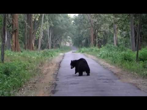 Black Bear, Jungle Retreat from Wayanad wildlife, Kerala