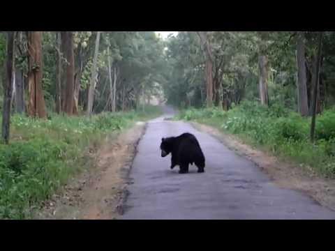 Black Bear, Jungle Retreat from Wayanad wildlife, Kerala