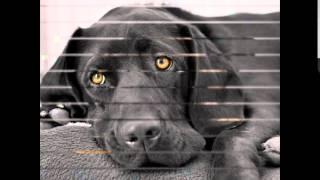педигри корм для собак(, 2014-10-20T16:03:56.000Z)