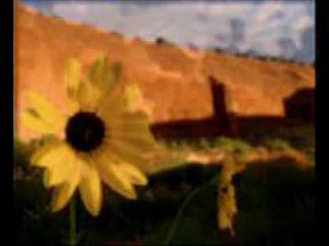 Stevie Wonder-Never dreamed you'd leave in summer