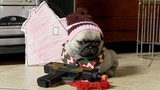 Home Alone (Pug Puppy Version)