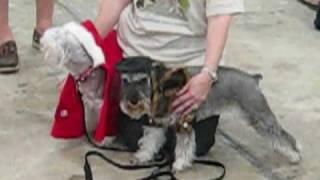 2009 Stroll - Schnauzer Love Rescue