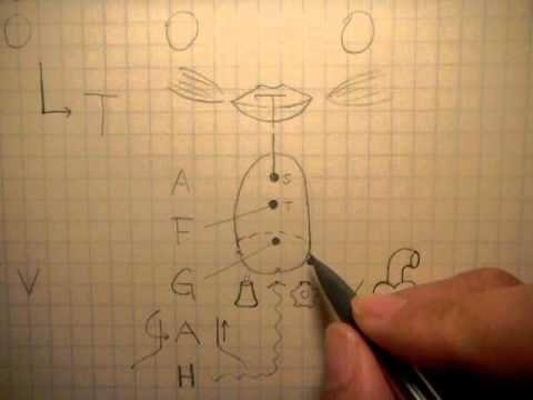 how to remember the 12 cranial nerves