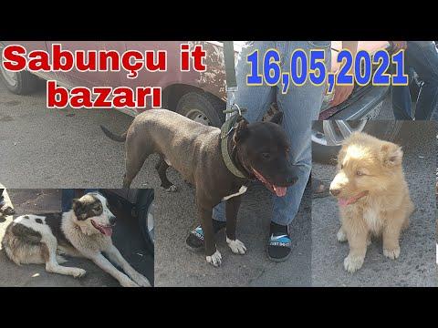 #qoyunbazari2021 Mastaga Qoyun Bazari 18.04.2021 #qoyunbazari #heyvanbazari#qoyunlar#qoyunquzu #quzu