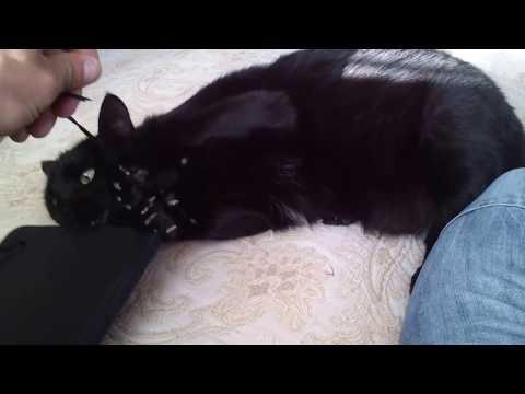 Amazing black cat attack