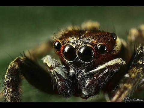 Самые опасные и ядовитые пауки в мире - YouTube