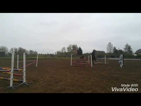 Robins 25.04.2017 - few fences and grid till 100cm