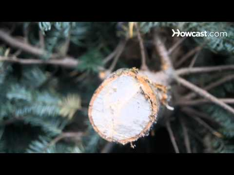 How To Keep Christmas Tree From Drying Out