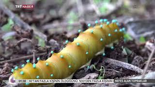 TRT Haber - Nefes Alan Topraklar  Ordu 1.Bölüm - 10.11.2016